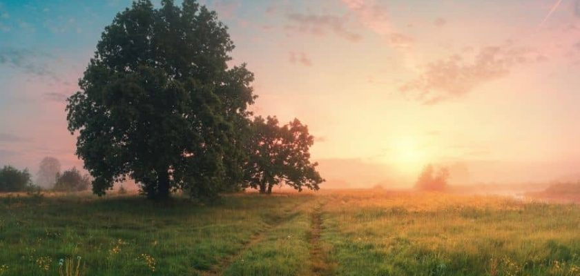 20 bible verses about spring and new life | faith fitness food