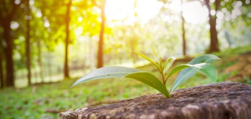 30 bible verses about new beginnings | faith fitness food